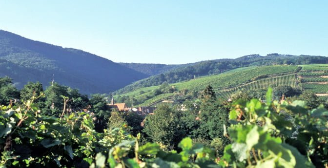 Alsace – hvor mat og vinkultur går hånd i hånd