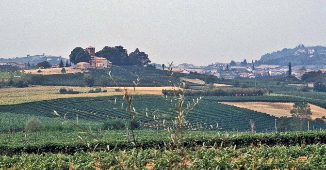 En vingård i Piemonte