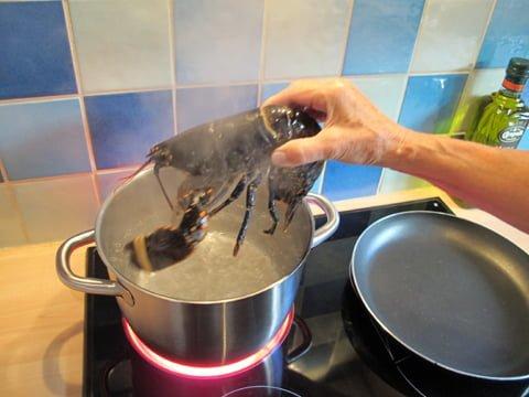 Hummeren kokes