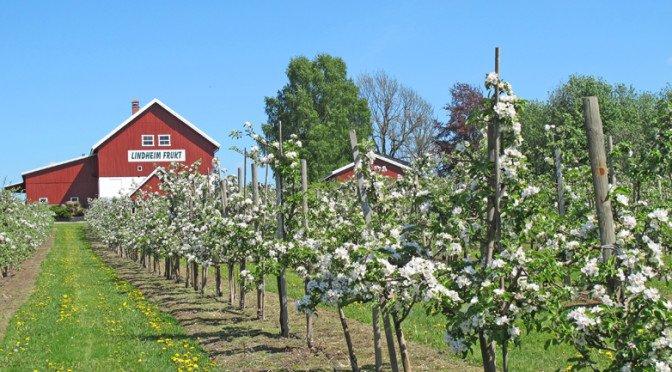 Lindheim ølkompani og fruktgård.