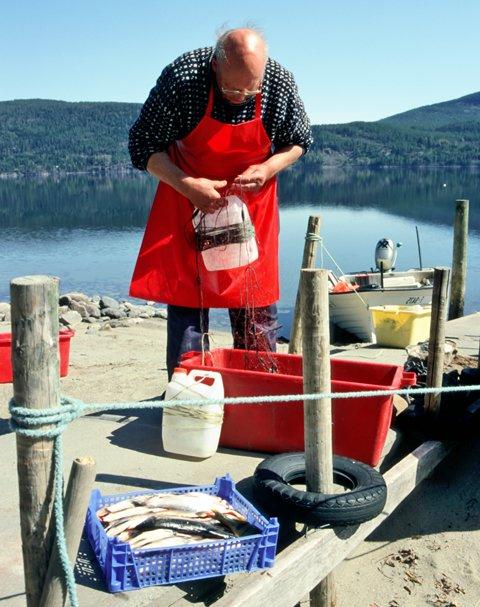 Sperillen fiskemottak