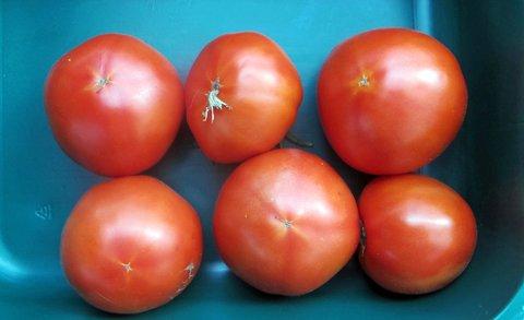 Tomat, biff_edited-1