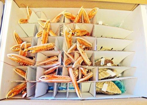 Scampi, forsendelsespakke Seashell AS