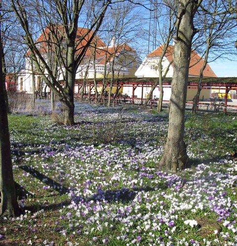 Vårblomster i Skagen_edited-1